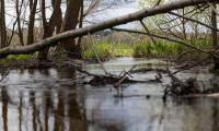 Krajeński Park Krajobrazowy, fot. Filip Kowalkowski dla UMWKP