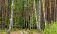 gorzno park krajobrazowy fot. Andrzej Goinski