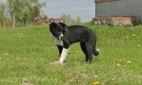Już niedługo stada owiec na terenie Zespołu Parków Krajobrazowych nad Dolną Wisłą doglądać będzie nowy pies pasterski. Fot. Zespół Parków Krajobrazowych nad Dolną Wisłą
