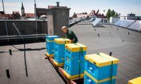 Pasieka na dachu Urzędu Marszałkowskiego, fot. Jacek Piotrowski